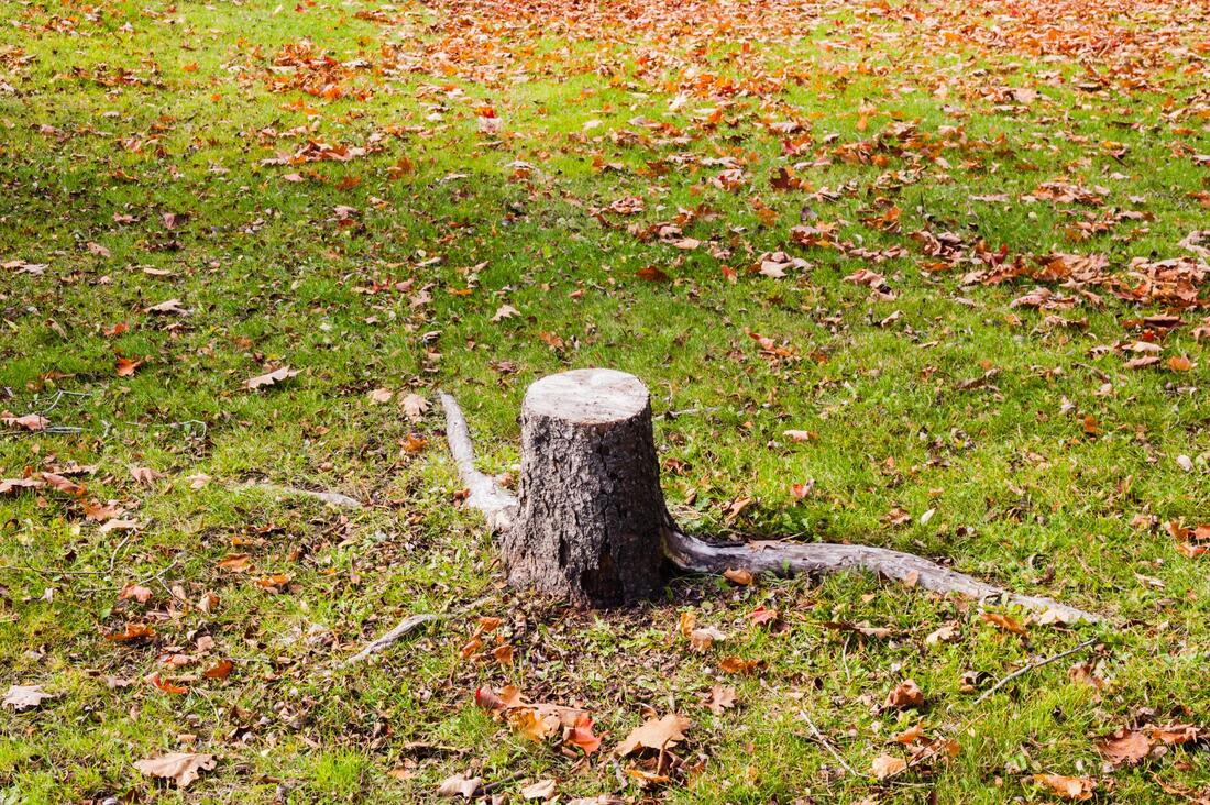 professional stump grinding service